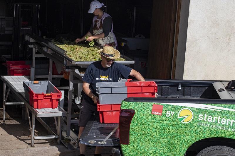 Déchargement d'un pick up rempli de caisses de raisins